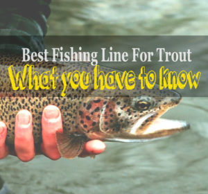 The Best Fishing Line for Trout – What you have to know