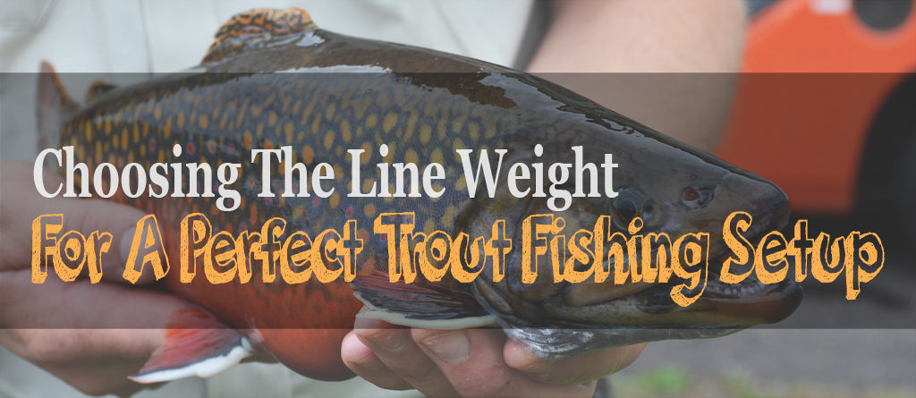 trout line weight