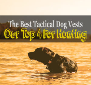 best tactical dog vest for hunting