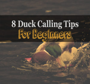 Duck Calling Tips For Beginners