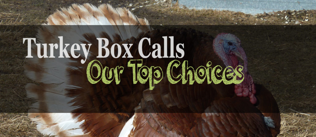 The 4 Best Turkey Box Calls