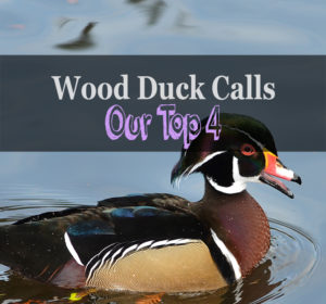 best wood duck call review