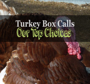 best turkey box call review