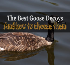 best goose decoys and their reviews
