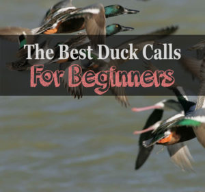 The 4 Best Duck Calls For Beginners