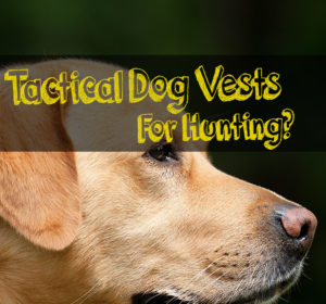 Why you shouldn't use a Tactical Dog Vest for Hunting